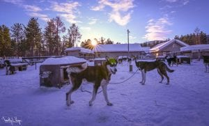 Northern Lights Dogsled Tour 2021