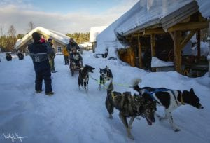 Northern Lights Dog Tour 2021