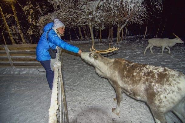 Northern Lights Reindeer Tour 2021