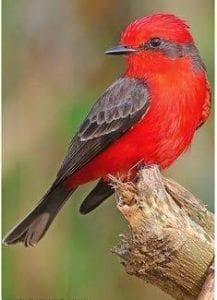 Galapagos Islands Finch tour 2021