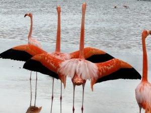 Galapagos Islands Flamingo tour 2021