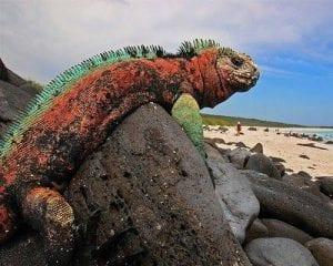 Galapagos Islands Iguana Tour 2021