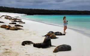 Galapagos Islands Sea lion Tour 2021
