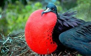 Galapagos Islands Bird Tour 2021
