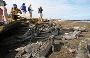 Galapagos Islands Igunaa Tour 2021
