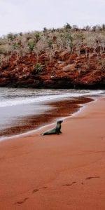 Galapagos Islands Rabida Tour 2021