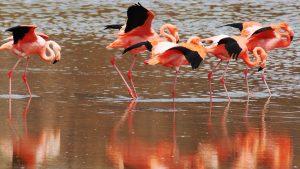 Galapagos Islands flamingo Tour 202