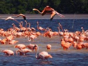 Mexico and Cuba Celestun Tour 2022