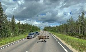 Scandinavia Reindeer Tour 2021