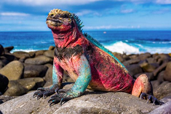 Galapagos Islands Tour Cruise 2021